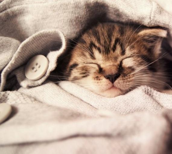 Стих про девочку с котом